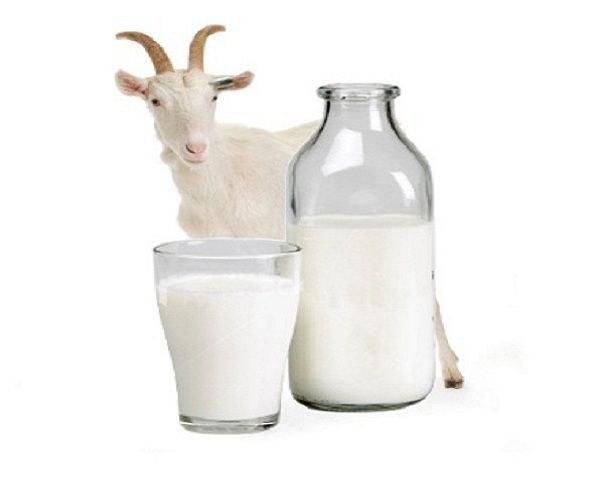 Можно ли пить молоко при гастрите