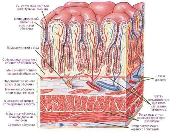 воспаление желудка симптомы и лечение